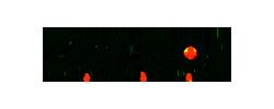 Logo Zertior